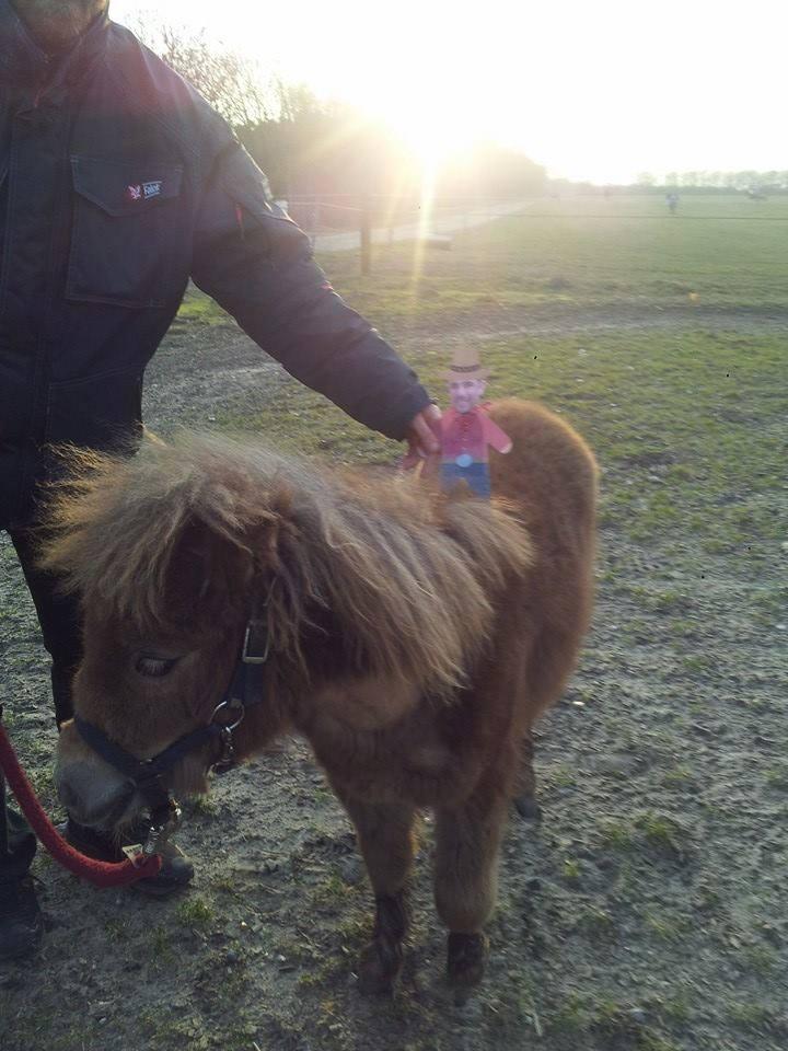 Mini Ben on a mini pony in Denmark
